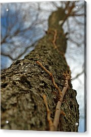 Tangled Acrylic Print by Juergen Roth