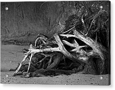Acrylic Print featuring the photograph Tangled Knots - Tree Roots by Jane Eleanor Nicholas