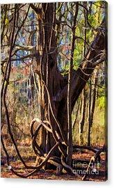 Tangled Vines On Tree Acrylic Print