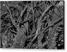 Tangled Tree Roots Acrylic Print by Garry Gay