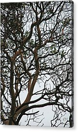 Tangled Web Tree Acrylic Print by Carol  Eliassen