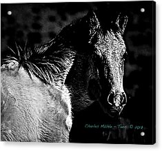 Taos Pony In B-w Acrylic Print