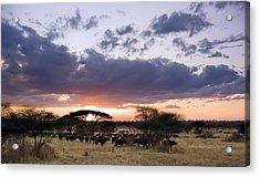 Tarangire Sunset Acrylic Print by Adam Romanowicz