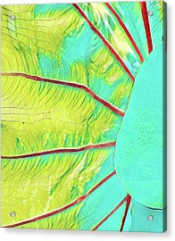 Taro Leaf In Turquoise - The Other Side Acrylic Print
