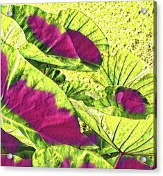 Taro Leaves In Green And Red Acrylic Print