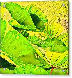 Taro Leaves In Green Acrylic Print