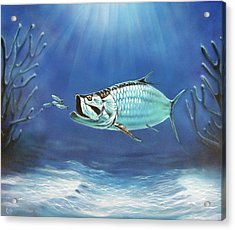 Tarpon Acrylic Print by Larry Cole