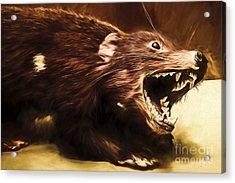 Tasmanian Devil Digital Painting Acrylic Print by Jorgo Photography - Wall Art Gallery