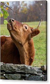 Acrylic Print featuring the photograph Tasty by Bill Wakeley