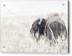 Tatanka Acrylic Print