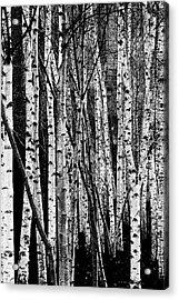 Tate Willows Acrylic Print