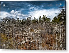 Tate's Hell State Forest Acrylic Print by Rich Leighton