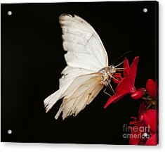 Tattered And Beautiful Acrylic Print by Ruth Jolly