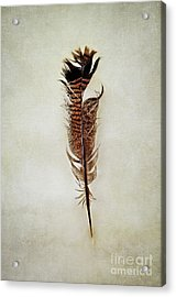 Acrylic Print featuring the photograph Tattered Turkey Feather by Stephanie Frey