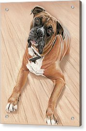 Taz My Best Friend Acrylic Print by Vanda Luddy