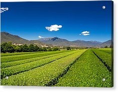 Tea In The Valley Acrylic Print by Mark Lucey