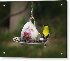 Teacup Finch Acrylic Print