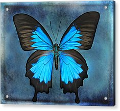 Teal Butterfly Acrylic Print by Lisbet Sjoberg