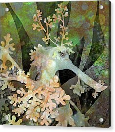 Teal Leafy Sea Dragon Acrylic Print