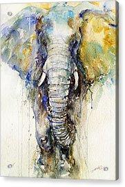 Teal Tusker Acrylic Print