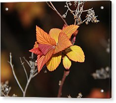Acrylic Print featuring the photograph Tear by Sergey and Svetlana Nassyrov