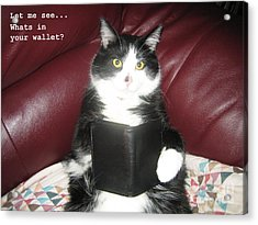 Teddy The Ninja Cat Wants To Know Whats In Your Wallet  Acrylic Print by Reb Frost