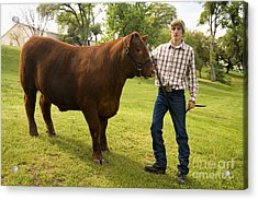 Teen And Red Angus Steer Acrylic Print