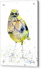 Teenage Robin Acrylic Print