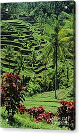 Tegalalang, Bali Acrylic Print by William Waterfall - Printscapes