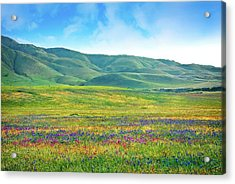 Tejon Ranch Wildflowers Acrylic Print