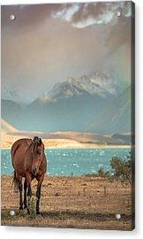Tekapo Horse Acrylic Print