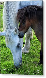 Telling Secrets Acrylic Print by Mike Martin