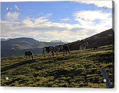 Telluride Mountain Herd Acrylic Print