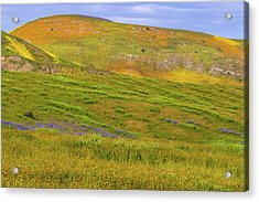 Acrylic Print featuring the photograph Temblor Range Spring Color by Marc Crumpler