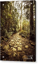 Temperate Mountain Trail Acrylic Print