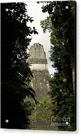 Temple In The Trees Tikal Guatemala Acrylic Print by John  Mitchell