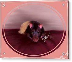 Templeton The Pet Fancy Rat Acrylic Print