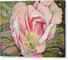 Tempting  Tulip Acrylic Print
