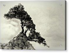 Tenacity Acrylic Print