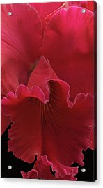 Tender Orchid Acrylic Print