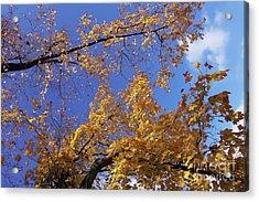 Tennessee Tree 1 Acrylic Print