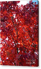 Tennessee Trees 3 Acrylic Print by Jeanne Forsythe