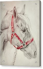 Tequila Sketch Acrylic Print by JAMART Photography
