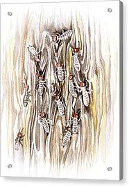Termites Acrylic Print by Alexandra Panaiotidi
