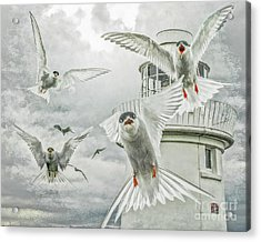 Tern Attack Acrylic Print