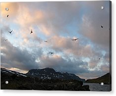 Terns At Midnight Acrylic Print by Sidsel Genee