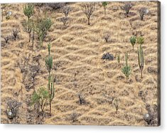 Acrylic Print featuring the photograph Terraced Slope by Britt Runyon