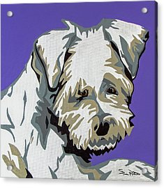 Terrier Mix Acrylic Print by Slade Roberts