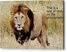 Test Of Text Acrylic Print by Alan Clifford