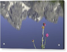 Teton Reflections Acrylic Print by Elizabeth Eldridge